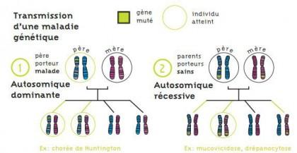 Comprendre les maladies génétiques