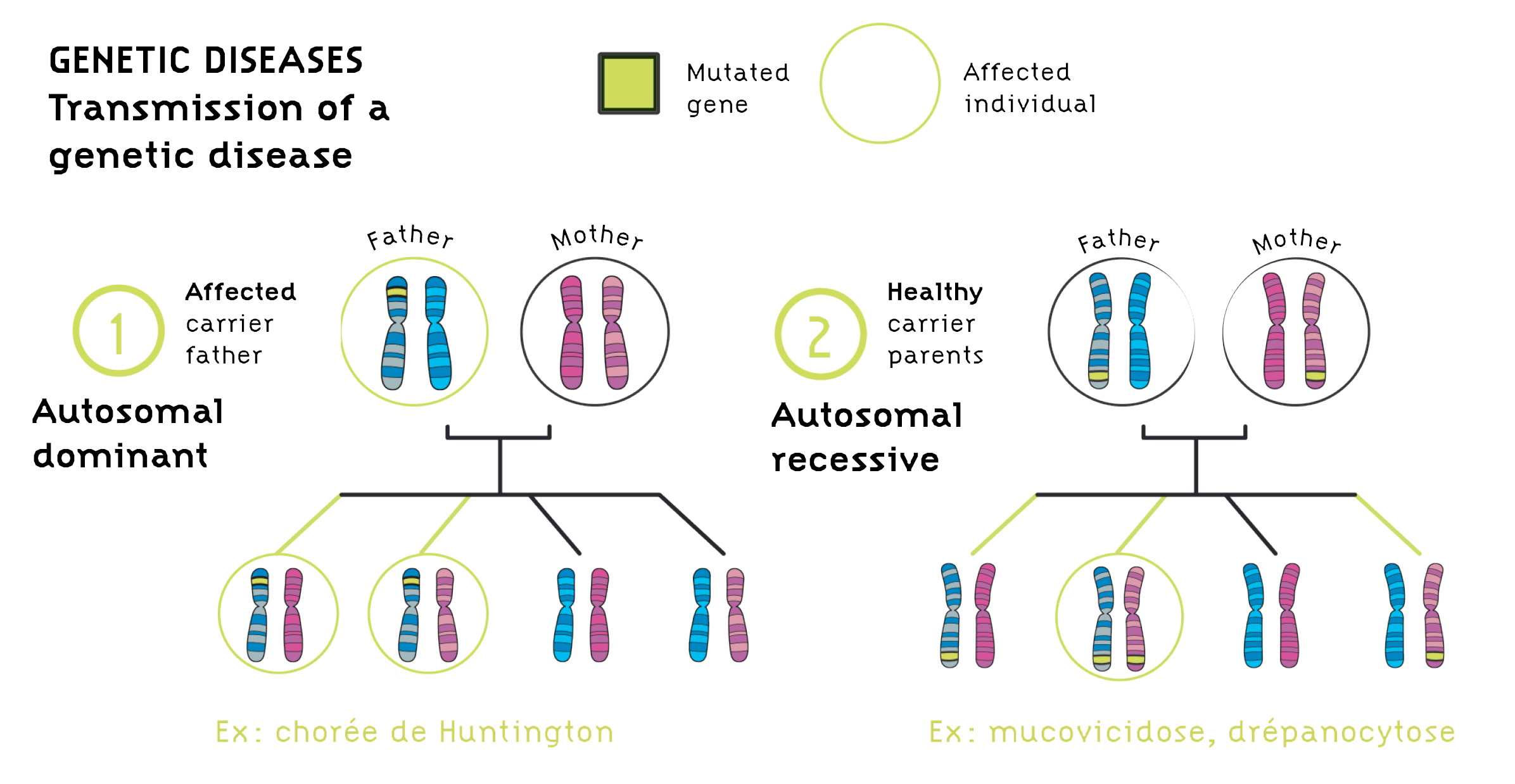 Transmission of a genetic disease